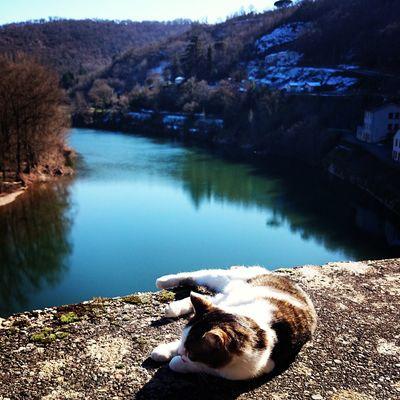 Chat à ambialet